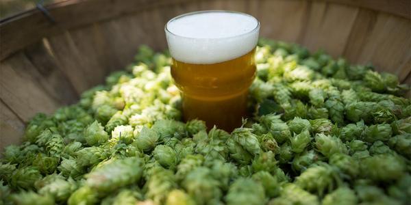 lupulos para cerveza Birra365