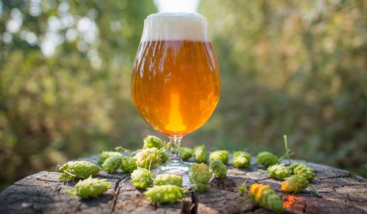 el lúpulo en la cerveza - Post Birra365